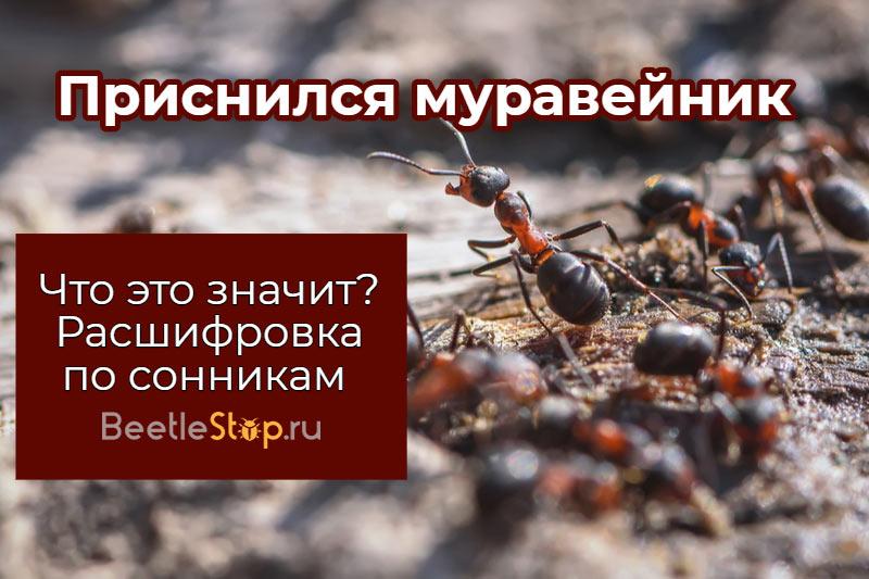 Un rêve sur la maison des fourmis travailleuses