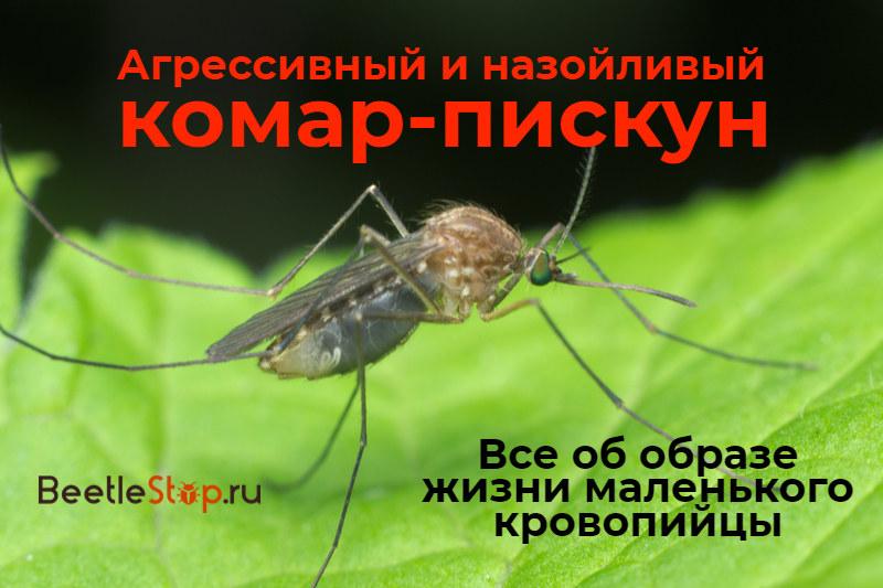 Grincement de moustique
